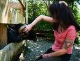 Бараны очень любят, чтобы их чесали за ушами. Сотрудники зоосада стараются уделять животным достаточно внимания.