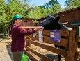 Сотрудники ежедневно кормят животных и ухаживают за ними. На фото Жанна Гайфуллина с коровой Веснушей.
