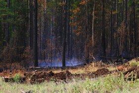 Лесной пожар в Усть-Илимском районе возник по вине рыбаков