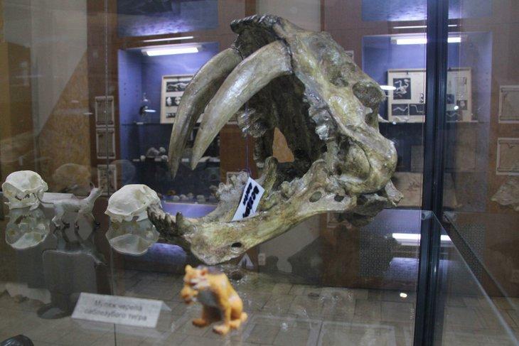 Экспонат выставки «Секреты острова черепов». Фото с сайта vk.com/museum.irkutsk