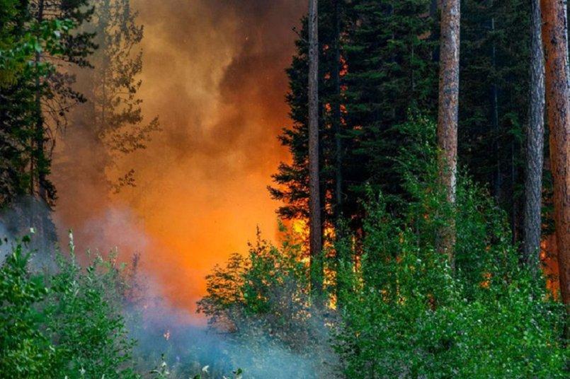 Пожары летом 2019 года. Фото Авиалесоохраны.