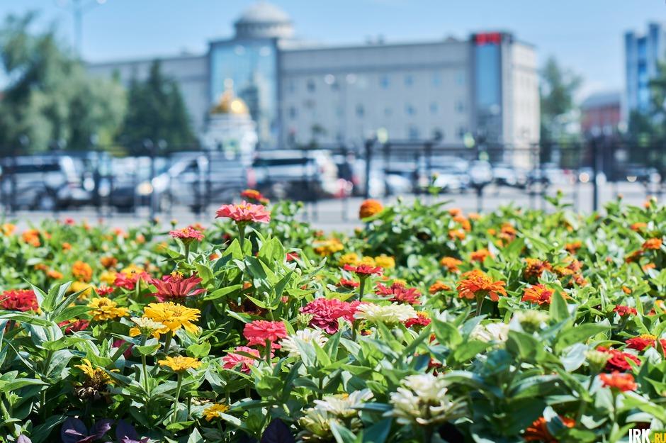 На иркутские клумбы в 2020 году высадили полмиллиона цветов.