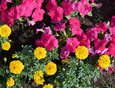 Для того, чтобы привнести яркие краски, высадили бегонии, петунии и другие цветы.