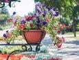 На центральных улицах и в скверах установили около тысячи цветочных вазонов.