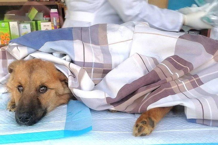 Обследование собак. Фото со страницы «К-9» в «Инстаграме»