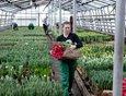 К Международному женскому дню сотрудники Горзеленхоза вырастили 23 вида тюльпанов.