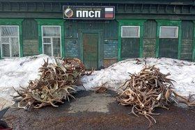 Две тонны рогов оленя задержали на посту в Тайшетском районе