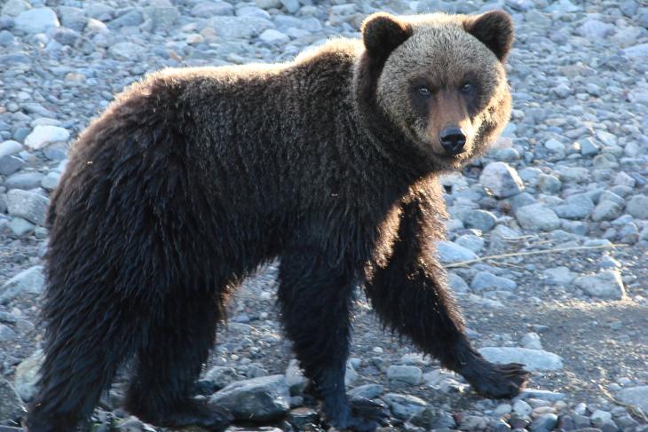 Медведь. Фото Сергея Шабурова