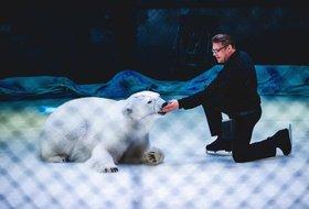 Цирк на льду «Айсберг». Шоу дрессированных белых медведей