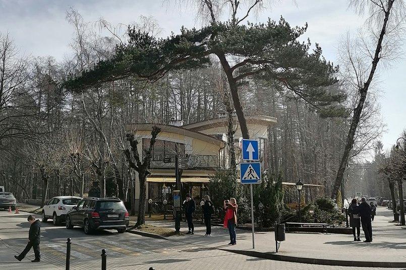 Деревья в виде зонтиков