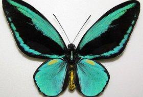 Выставка «Бабочки-красавицы и жуки-гиганты»