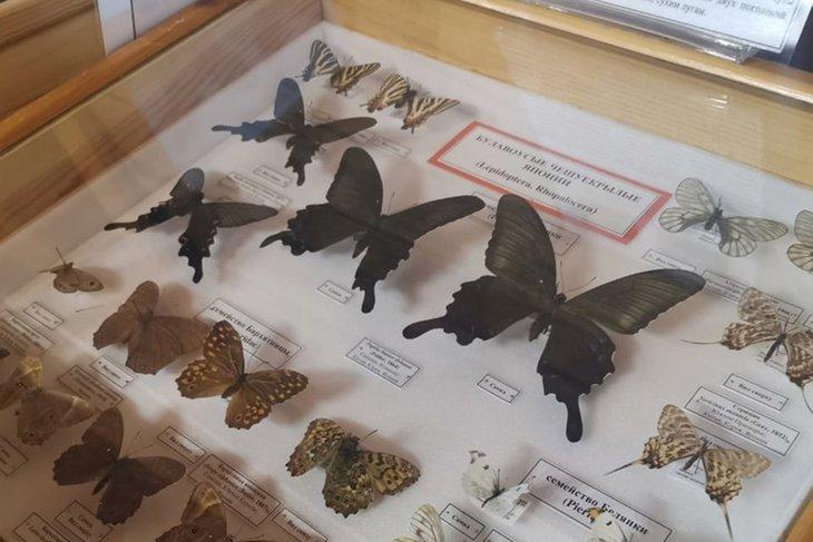 В усадьбе Сукачёва сейчас можно увидеть засушенных экзотических бабочек. Фото со страницы музея «ВКонтакте»