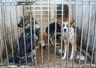 Собаки, привезенные из приюта «Пять звезд» в К-9. Автор фото — Лали Янкевич