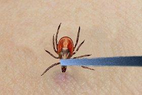 От энцефалита в регионе вакцинировано 38 тысяч человек. Фото fb.ru.