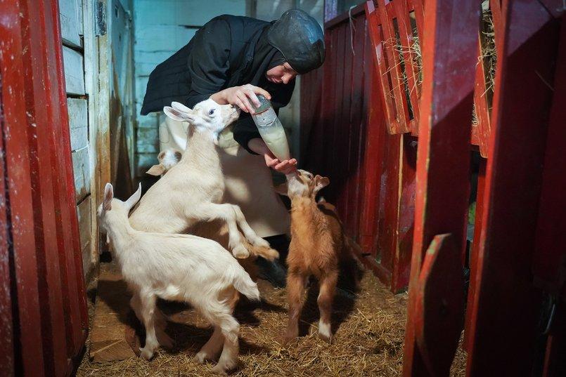Мать Иллария ухаживает за животными