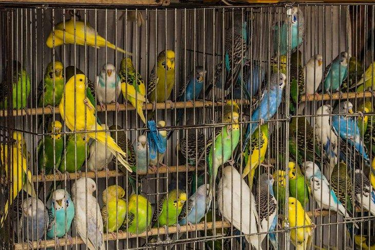 Фото с сайта moybiznes.org