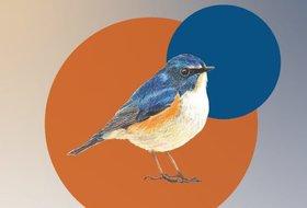 Осенний фестиваль птиц