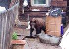 Фото с сайта evo-rus.com