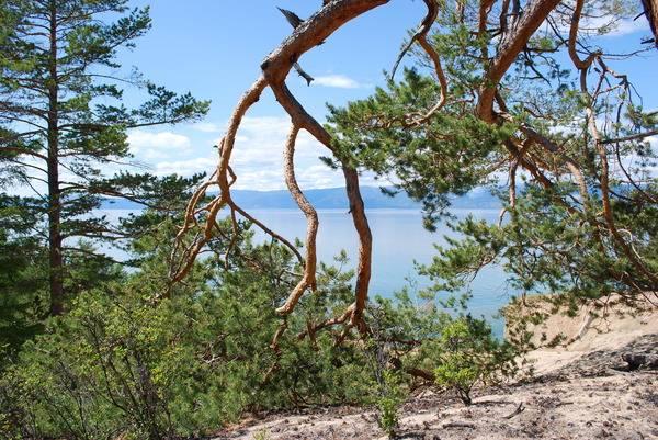 Природа Ольхона. Фото - В. Моисеевой