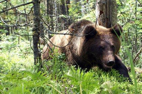 Медведь. Фото vk.com/irk_k9