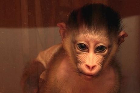 Детеныш мандрила. Фото иркутской зоогалереи