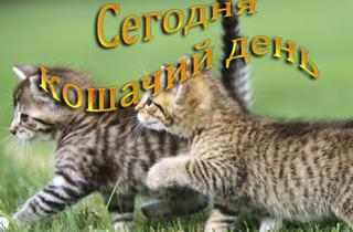 Поздравления с всемирным днем кошек 58