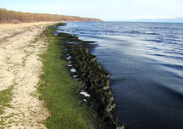 Самое крупное скопление органики в 10 километрах западнее Северобайкальска