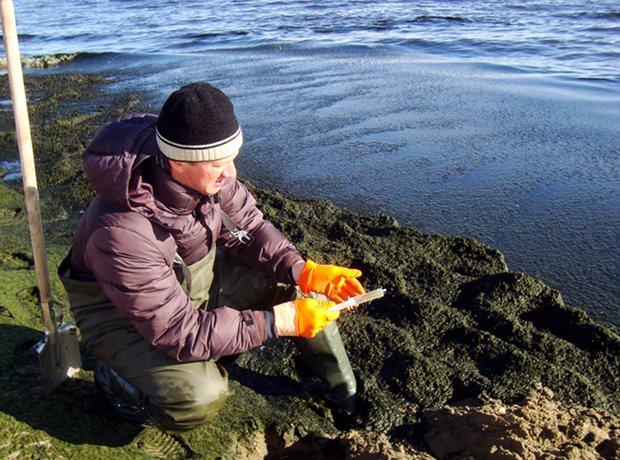 Отбор санитарно-микробиологических проб в толще скоплений на побережье