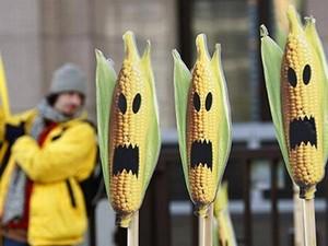 Акция «Гринпис» против разрешения на выращивание гмо-продукции. Фото с сайта ru.reuters.com