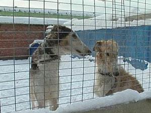 Собаки в питомнике, Иркутск. Фото из архива АС Байкал ТВ.