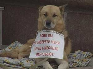 Бездомный пес. Фото АС Байкал ТВ.