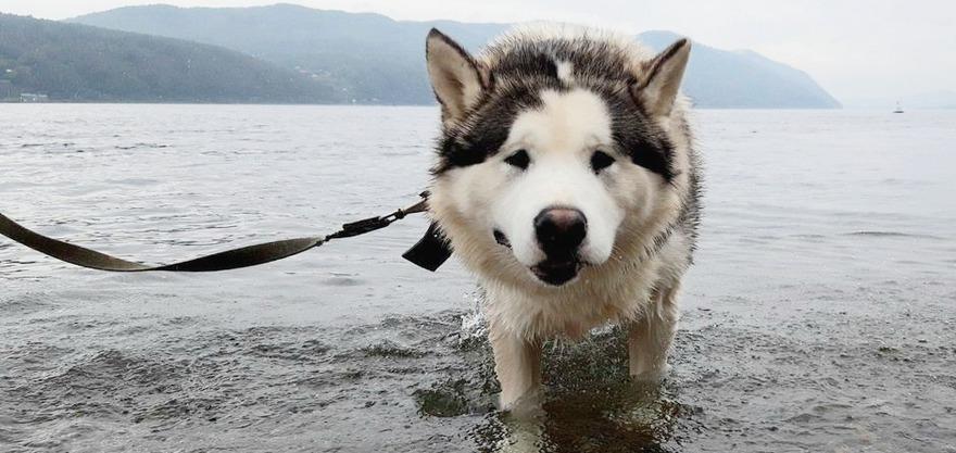 Барон. Фото предоставлено «Сибирским зоопарком»