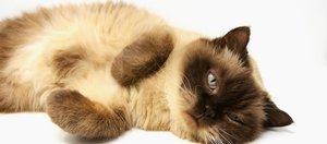Как провести выходные: выставка кошек или «Лыжня России»?