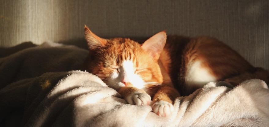 Кот. Фото с сайта www.pixabay.com