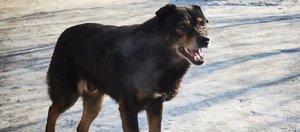 Как происходит отлов бродячих собак по новым правилам