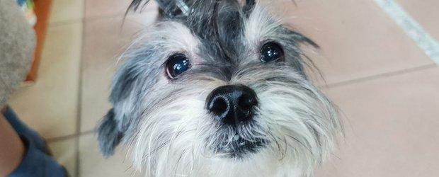 А если собака потеряется? Где в Иркутске сделать жетон-адресник