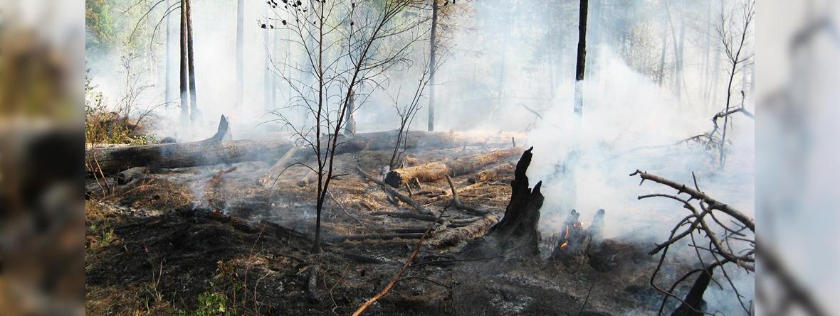 Лесной пожар. Фото со страницы Анатолия Казакевича в Facebook