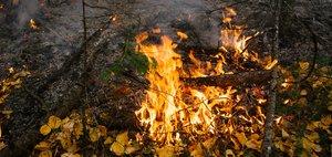 Не бывает дыма без огня: хроники горящего севера