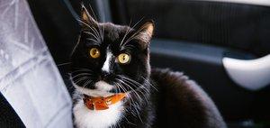 Кот-путешественник по имени Граф: дорога на Байкал