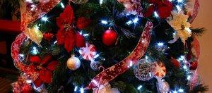Обзор новогодних ёлок в Иркутске
