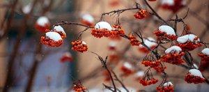 Фото и видео снегопада в Иркутске 11-12 марта