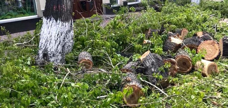 Ветки обрезанных деревьев. Автор фото — Ольга Жуйкова