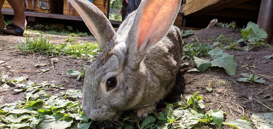 Кролик. Автор фото - Екатерина Ламинская