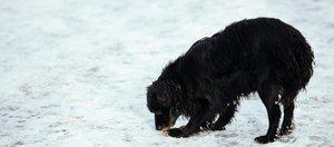 Что делать, если вашу собаку отравили