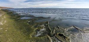 Фекальное озеро Байкал