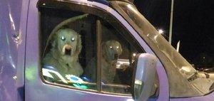 Автохам: собака за рулем и гонки в городе