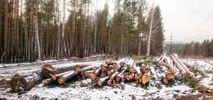 Суд защитил ценные леса от министра Шеверды
