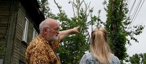 Почему в Иркутске вырубают деревья? Мнение жителей и экспертов