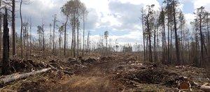 Лесной бизнес по-иркутски