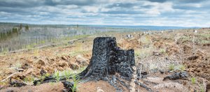 Шеверда vs Зенков: битва за иркутский лес
